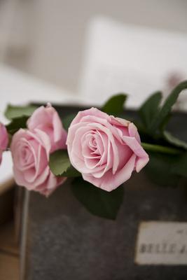 5789-blomstersprket_ros_400